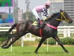 Sao Paolo Jockey Club 2014 Grand Prix at Citade Jardim Hippodrome