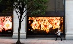 Apple's 'Flowers' installation at Selfridges, London